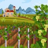 Wachsender Vektor Ernte des Weinbergs Schöne Sommerfelder und Mountain Viewen lizenzfreie abbildung