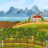 Wachsender Vektor Ernte des Weinbergs Schöne Sommerfelder und Mountain Viewen vektor abbildung