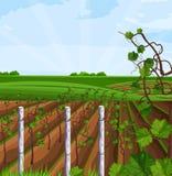 Wachsender Vektor Ernte des Weinbergs Schöne Sommerfelder und Mountain Viewen stock abbildung
