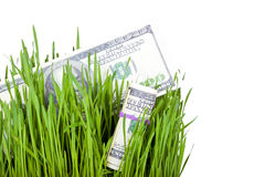 Wachsendes Geld im Gras Stockfotos