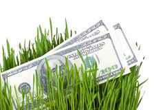 Wachsendes Geld im Gras Lizenzfreies Stockfoto
