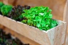 Wachsendes Gemüse in den Töpfen hängt an den Wänden | Organischer gesunder Lebensmittelinhaltsstoff | Lebensmittelphotographie Lizenzfreies Stockbild