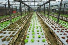 Wachsendes Gemüse des Bauernhofes zuhause Lizenzfreies Stockfoto
