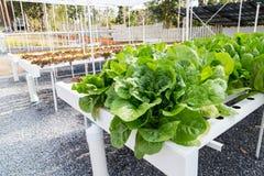 Wachsendes Gemüse unter Verwendung keines Bodens oder soilless Kultur Stockfotos