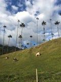 WachsPalmen in Cocora-Tal, Salento, Kolumbien lizenzfreie stockfotografie