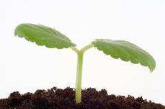 Wachstum Lizenzfreies Stockfoto