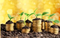 Wachstum Lizenzfreie Stockfotos