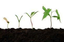 Wachstum Stockbild