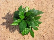 Wachstum auf der Wüste Stockfotografie