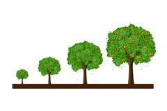 Wachstum des Baums Stockfoto