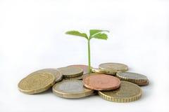 Wachstum - Geschäftskonzept Stockfoto