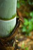 Wachstum mit Schalenhaut Stockfotografie