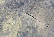 Wachstum-Ringe Lizenzfreie Stockbilder