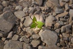 Wachstum von kleinen Sämlingen Lizenzfreies Stockbild