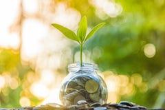Wachstumsbaum Grünhintergrund mit schwarzer Lehm Finanzierung und Wachstum lizenzfreie stockfotografie