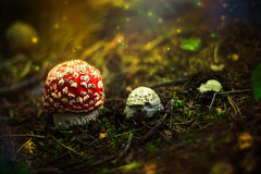 Wachstumsphase des Pilzes Lizenzfreies Stockfoto