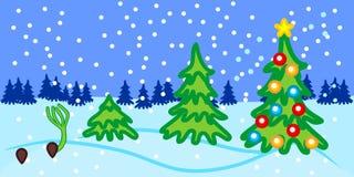 Weihnachtsbaum Samen.Wachstumsstufen Der Fichte Von Samen Zu Weihnachtsbaum Mit