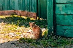 Wacht de gember eenzame kat op zijn eigenaar op het gras in de zomer in de schaduw van het huis Stock Foto's