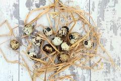 Wachtel-Eier Stockfoto