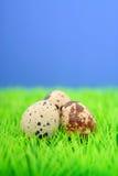 Wachtel-Eier Stockbilder