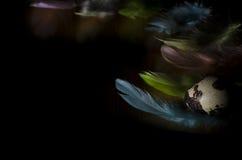 Wachtelei und farbige Federn Stockfoto