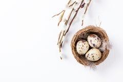 Wachteleier in einem Nest mit Federn und Pussyweide verzweigen sich auf einen weißen Hintergrund für Ostern Stockfotos