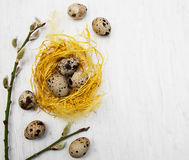 Wachteleier im Nest lizenzfreie stockfotografie