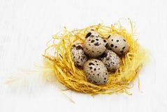 Wachteleier im Nest Lizenzfreie Stockfotos