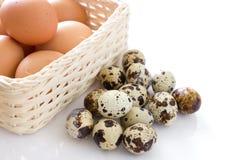 Wachteleier und Eier Lizenzfreie Stockbilder