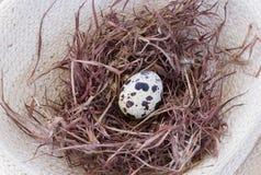 Wachteln egg Stockfoto