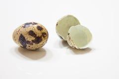 Wachteln egg Stockfotos