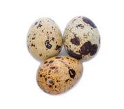 Wachteln egg Lizenzfreie Stockbilder