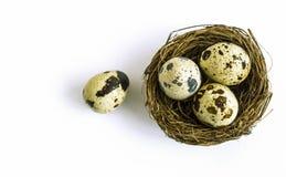 Wachteln eggsin Nest lizenzfreies stockbild