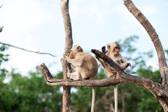 Wachten op en aap die kans gestolen voedsel in een eiland van andaman overzees, Thailand kijken Hier is de pijler ook voor lokale Royalty-vrije Stock Foto