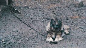 Wachthond op een ketting in het dorp Hond in bijlage met korte ketting aan zijn kennel stock footage