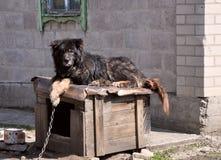 Wachthond op plicht Stock Foto