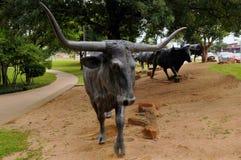 Waco bydło Jedzie Zdjęcia Stock