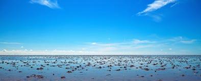 Wadden hav arkivbild