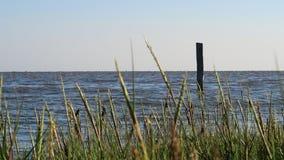 Wadden morze zbiory wideo