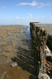 Wadden Sea. Breakwater at low tide at the borders of the Wadden sea in the north of Friesland(Holland Stock Image