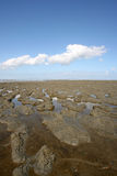 Wadden sea. Low tide at the borders of the Wadden sea  in the north of Friesland(Holland Royalty Free Stock Photos