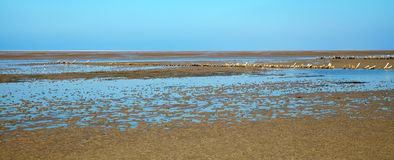 Wadden sea Royalty Free Stock Image
