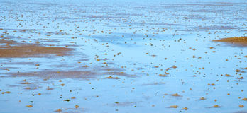 Wadden sea Royalty Free Stock Images