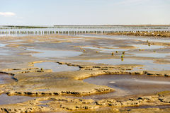 Wadden sea in Holland. While low ebb tidal Royalty Free Stock Images