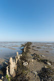 Wadden sea in Holland Stock Photo