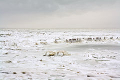 Wadden sea with ice floes Stock Photo
