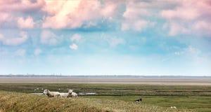 Wadden sea from the island Mando Royalty Free Stock Photography