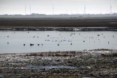 Wadden sea lake lose to North Sea Stock Photo