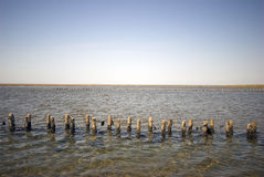 Wadden Sea Low Tide Landscape Stock Image