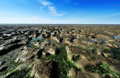 Wadden Sea in the Netherlands Royalty Free Stock Image